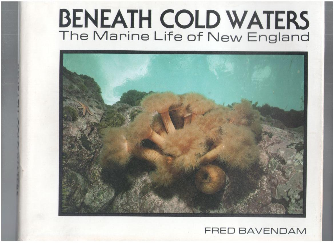 Image for Beneath Cold Waters: The Marine Life of New England