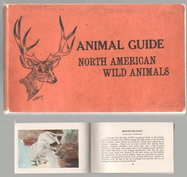Image for Animal Guide: North American Wild Animals