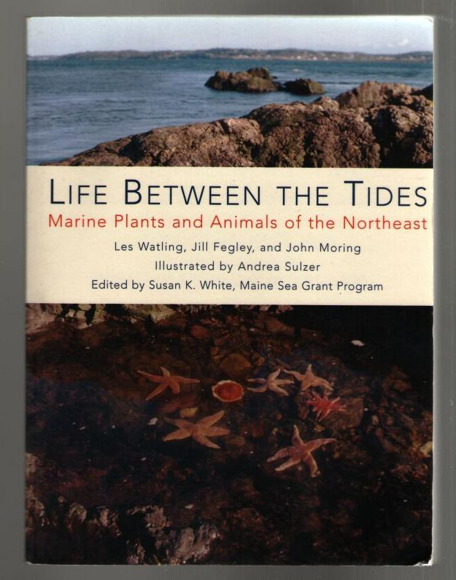 Image for Life Between the Tides: Marine Plants and Animals of the Northeast